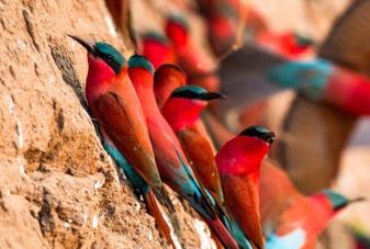 Bird Zambia